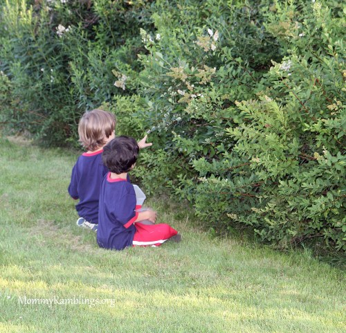 Blueberry-Picking-1