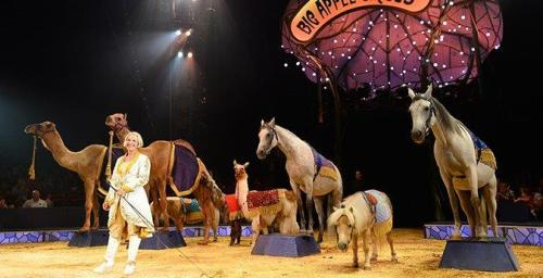 Big-Apple-Circus-Animals-Mommy-Ramblings