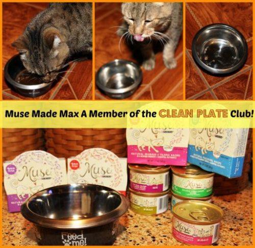clean plate club collage