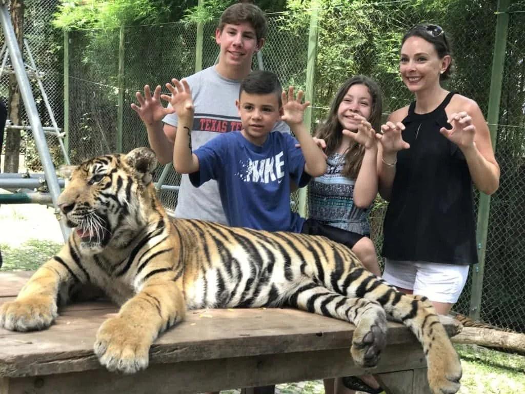 Tiger Kingdom Phuket Thailand
