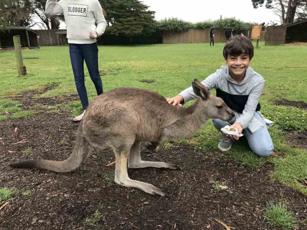 feeding kangaroos at the Great Ocean Road Wildlife Park