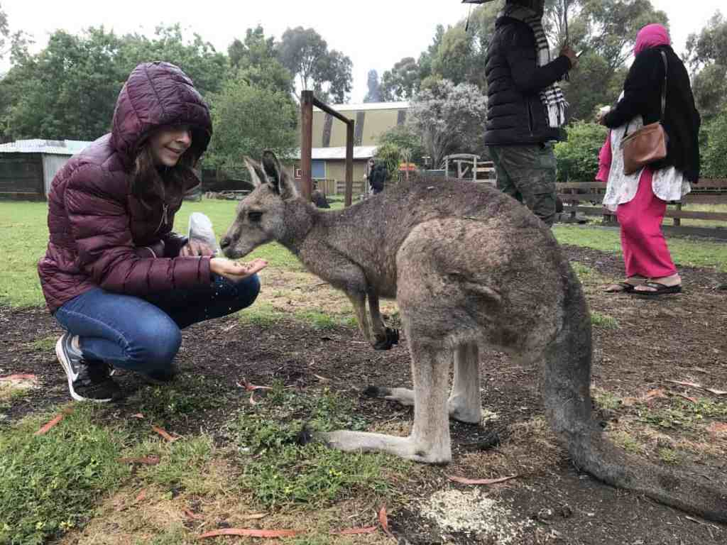 Great Ocean Road Wildlife Park