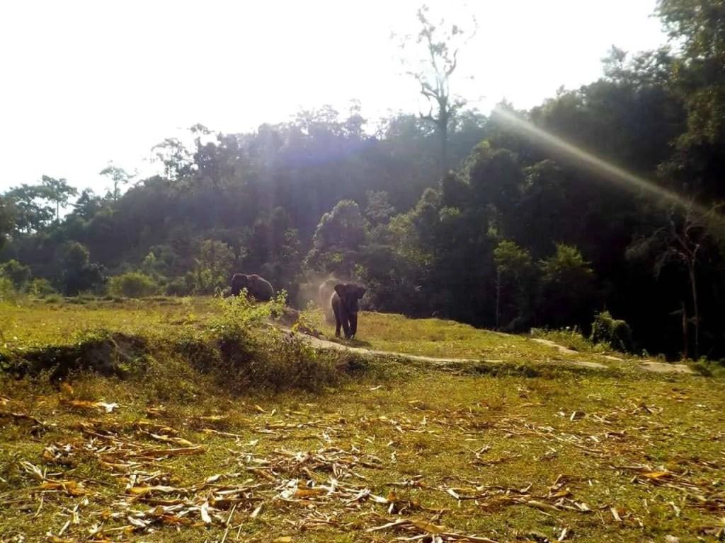 Into the Wild elephant santuary