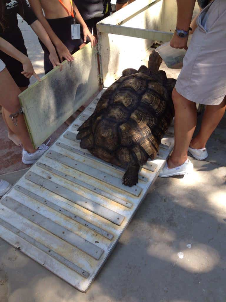 Meeting a Tortoise at Discovery cove