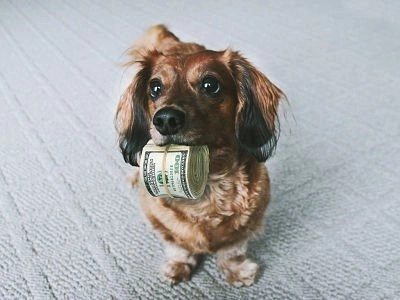 spend-less-dosh-dog