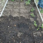 Our Square Foot Garden 2013:  Update #1