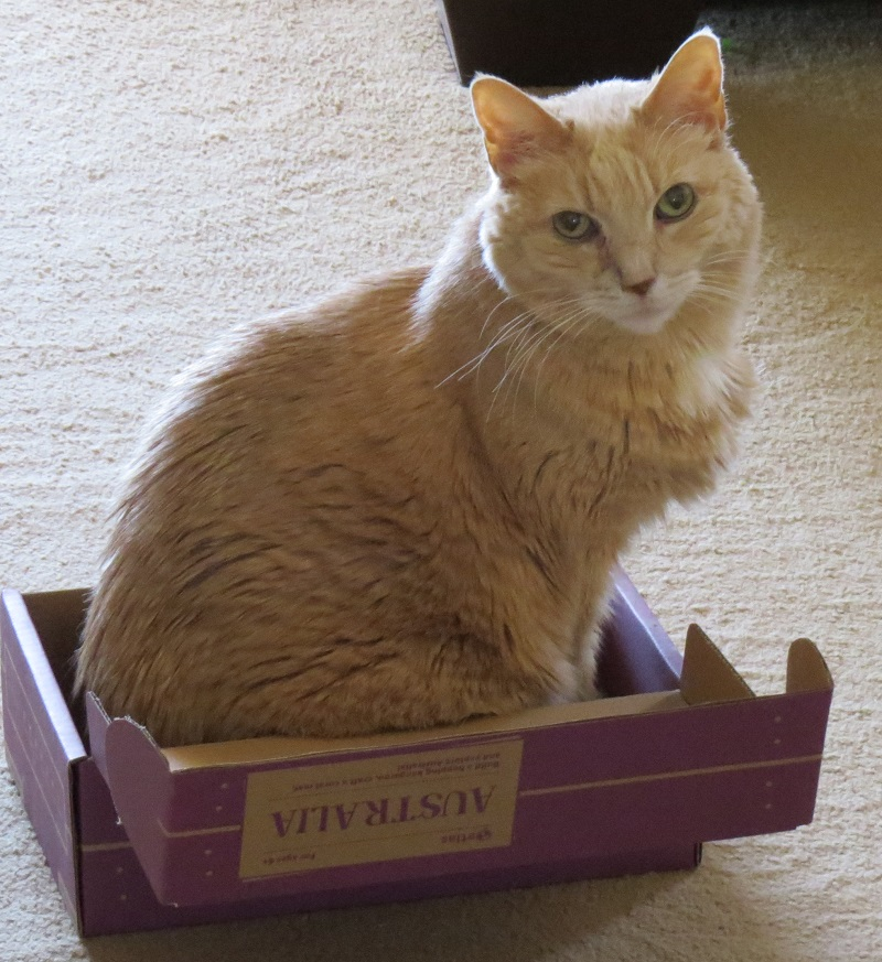 Pureed Foods for Cats