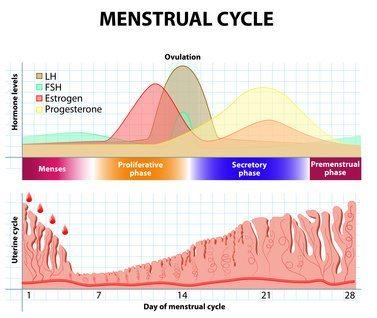 Second Week of Pregnancy – 2 Weeks pregnant – Pregnancy Week 2