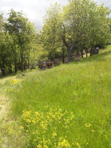chateauneuf- loire-42-apiculture-rucher-le-pillier (2)