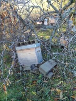 mon-abeille-rucher-du-pilier-1
