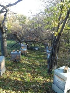 mon-abeille-rucher-du-pilier-3