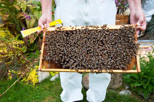 ruche dans le jardin