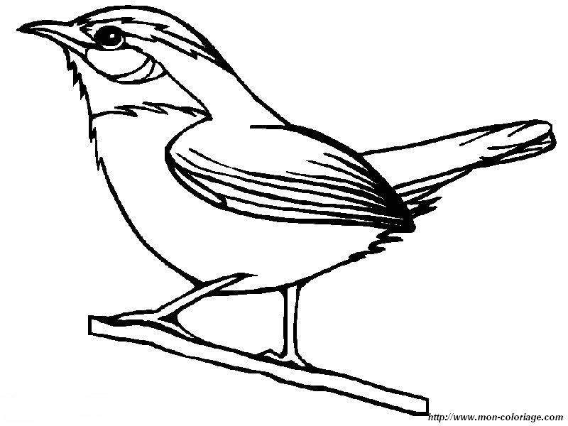 Coloriage de Oiseau, dessin un petit pinson à colorier