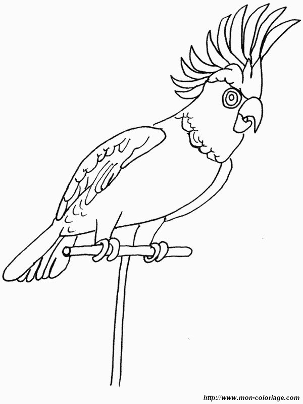 Black White Pages Bird Drawing And Coloring