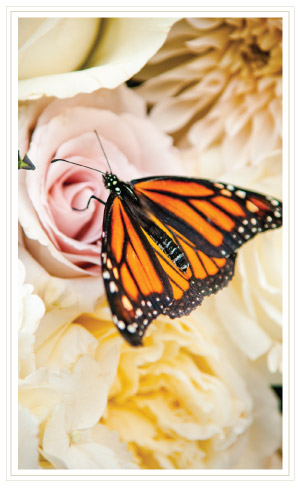 Monarch on Roses