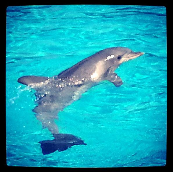 planete-sauvage-dauphins