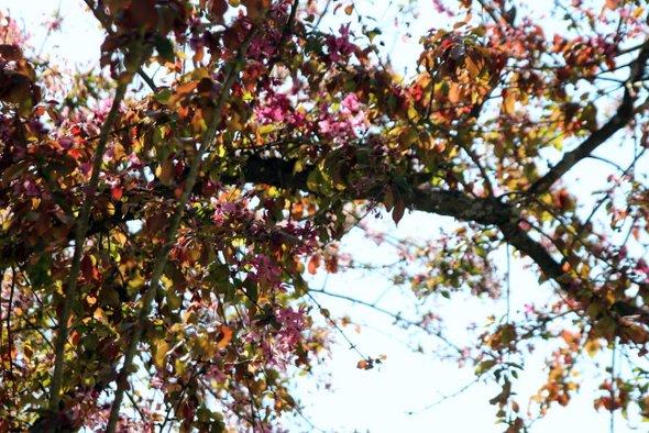 caillebotte-arbre