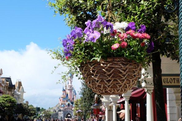 disney-fleurs