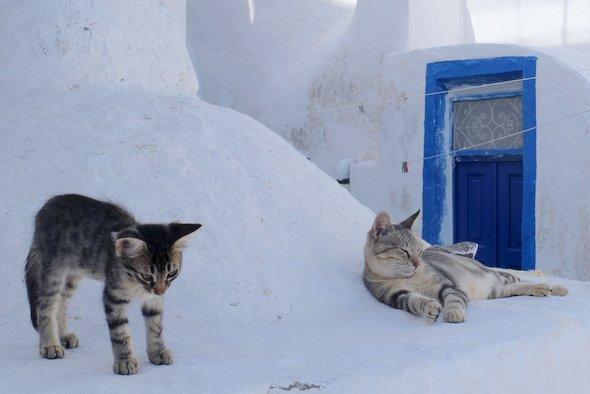 santorin-thirissia-cats