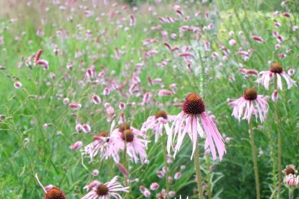 jardins-sothys-fleurs
