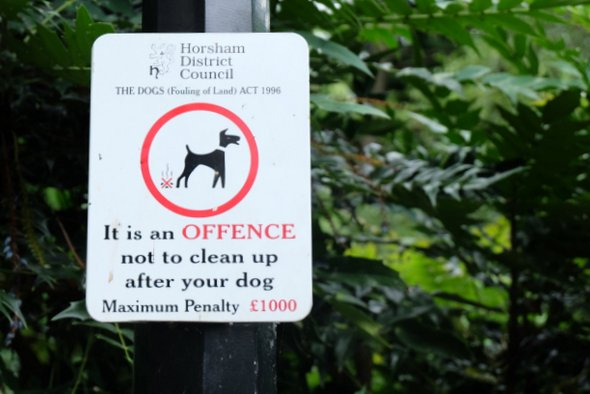 horsham-dog-clean
