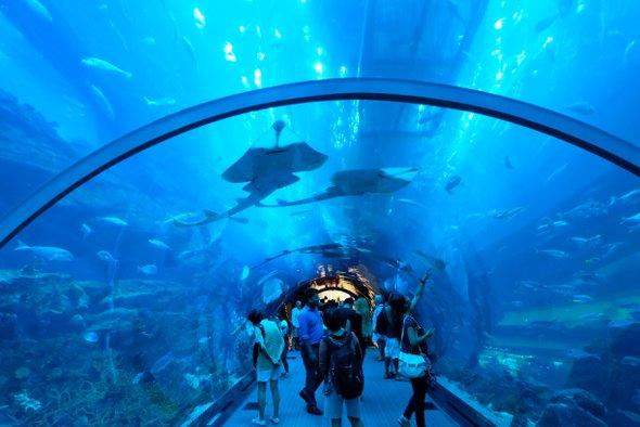 aquarium-dubai