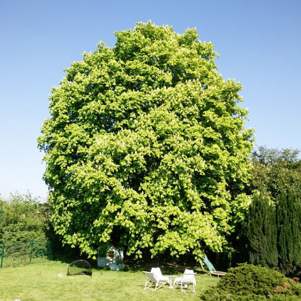 arbre-vivaldi-fleurs