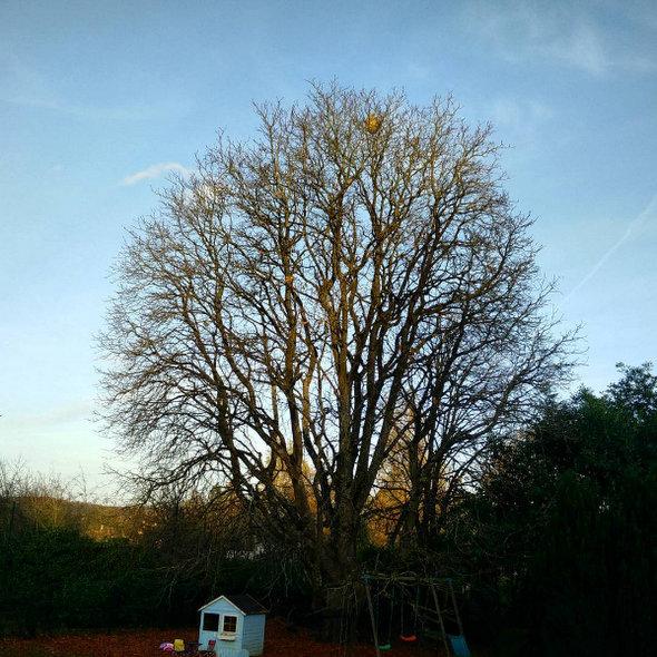 arbre-vivaldi-hiver