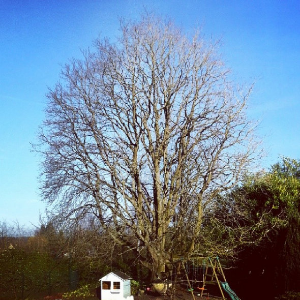 arbre-vivaldi-marronnier-hiver