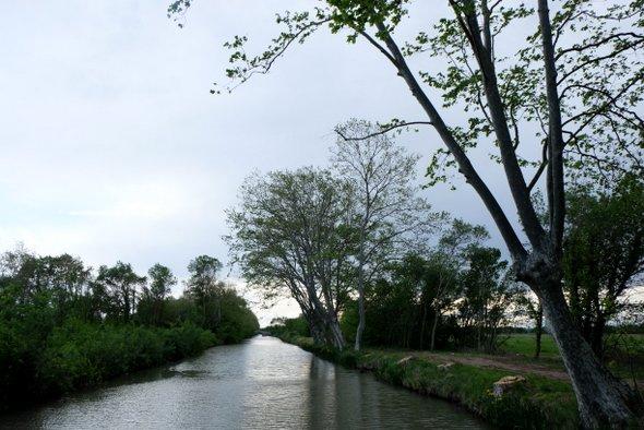 canal-midi-arbres