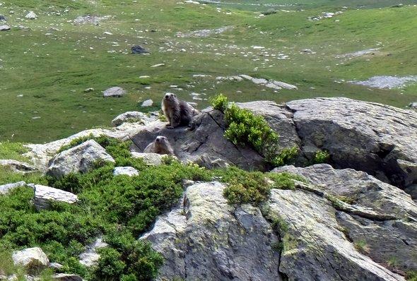 larosiere-marmottes