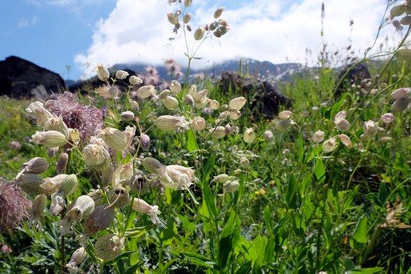 petard-naturel-fleur