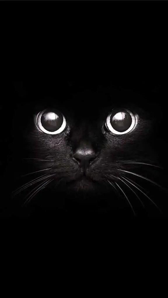 un visage de chat noir sur fond noir