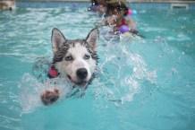Resultado de imagen de perritos en la piscina