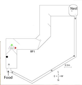 Circuit fourmis