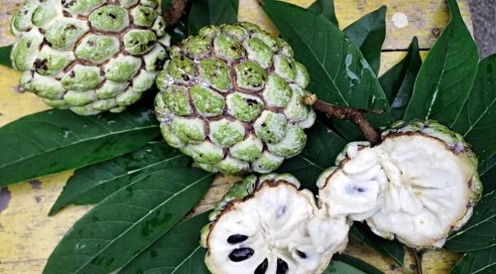 buah nona, buah srikaya, Annona squamosa