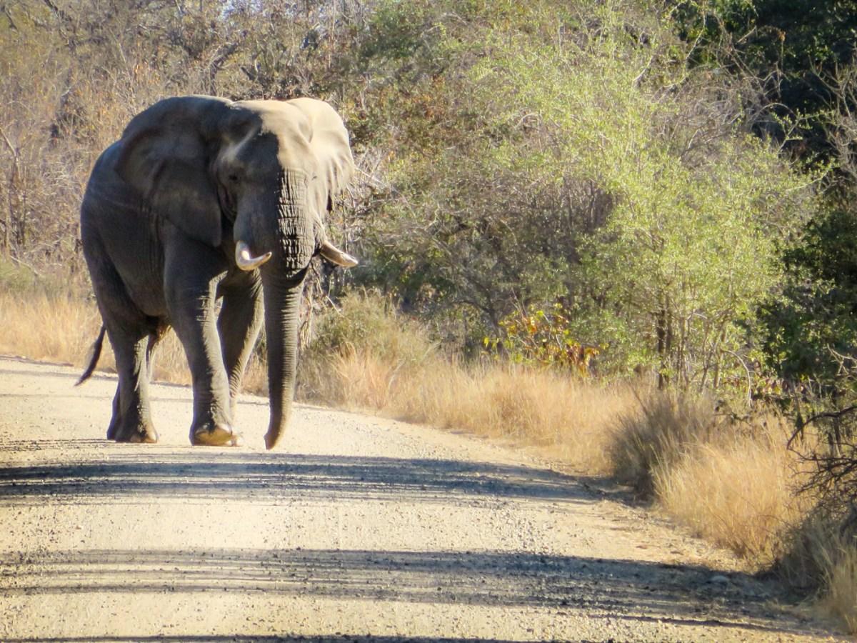 Não andar de elefantes na Tailândia