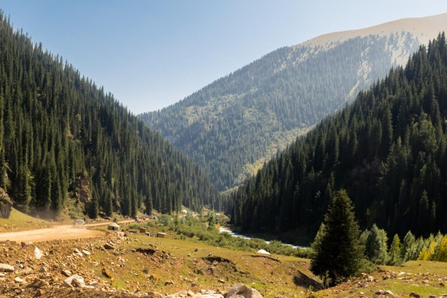 Mountains and pine tress in Kyrgyzstan