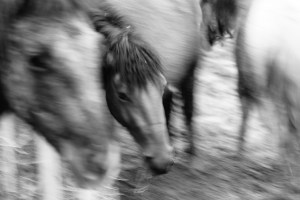 Moved With Horses