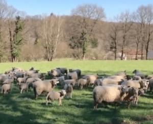 VIDÉO: Un berger qui a tout compris sur le Coronavirus