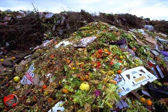 rifiuti-alimentari-