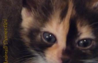 gattini da adottare, la guida
