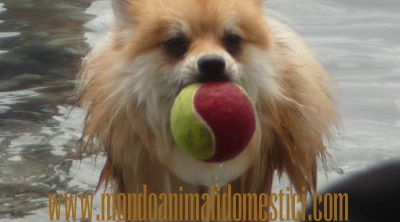 cane in vacanza