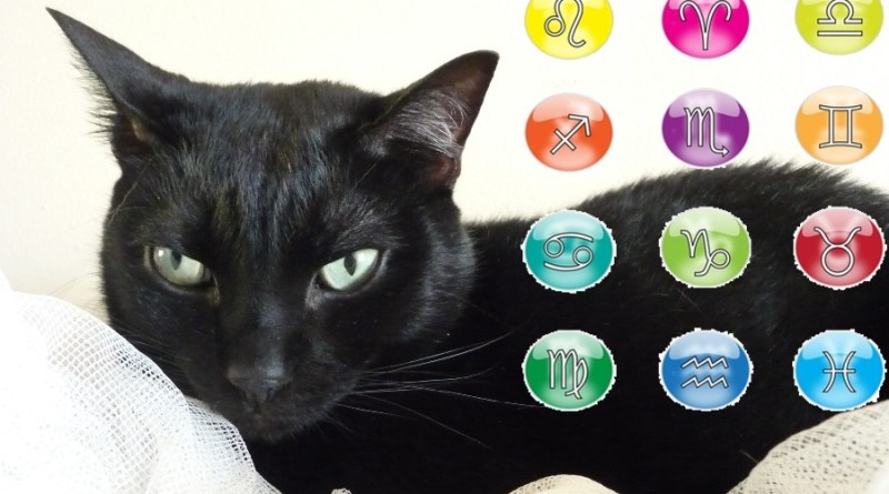 oroscopo gatto nero