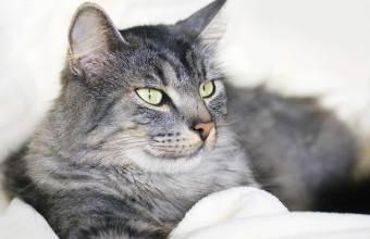 Alimentazione Gatto Anziano, quale cibo per gatti