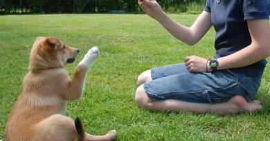 addestramento animali