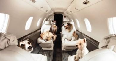 Voli in aereo con animali domestici