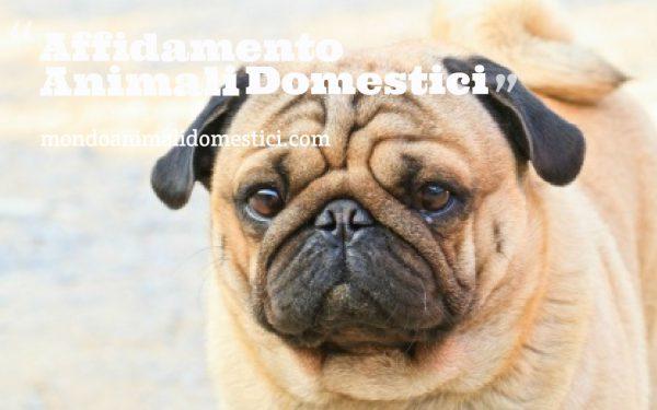 affidamento animali domestici