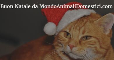 Buon Natale da MondoAnimali Domestici gatto