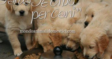 Fai da Te Cibo per Cani